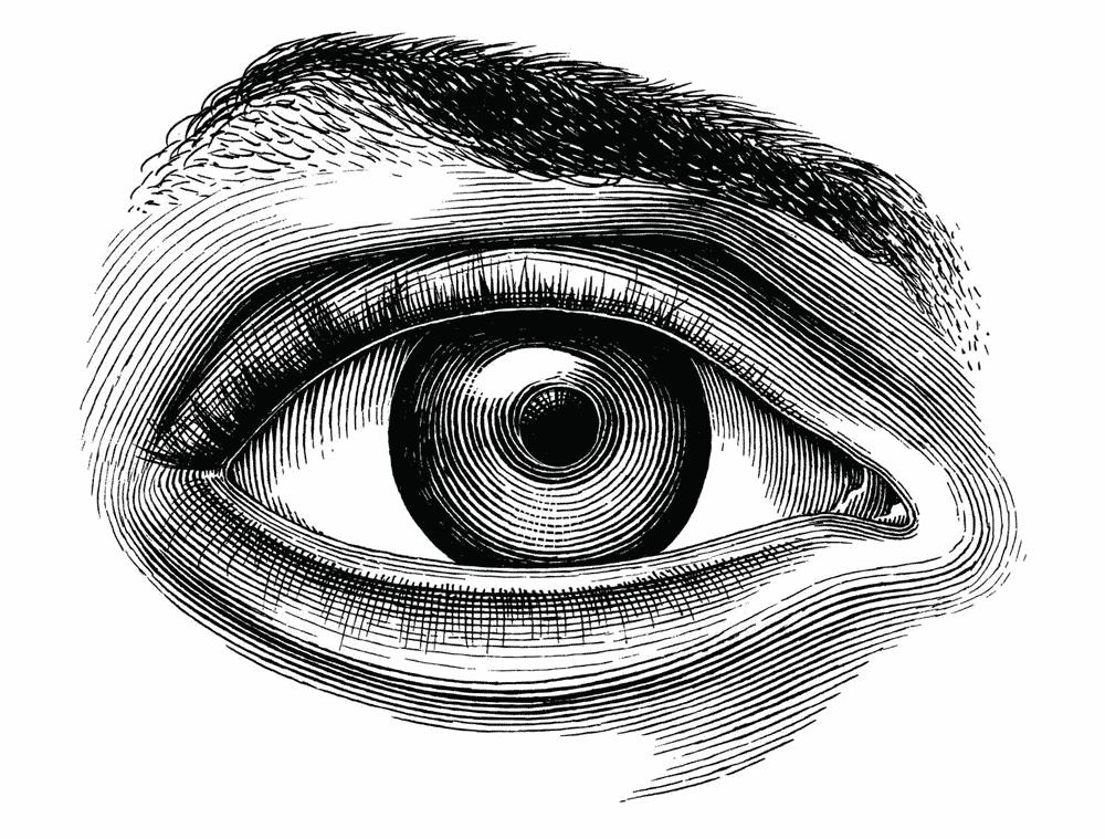 Illustrazione incisione vettoriale di un occhio utilizzata sul sito Willbe nei servizi di visual identity