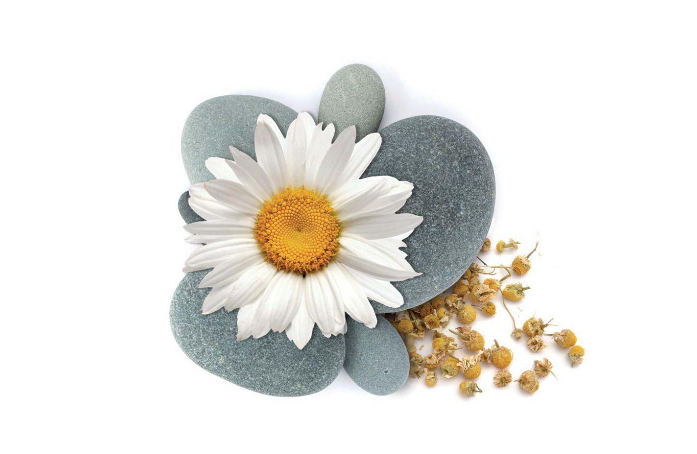 Fiori freschi e secchi di camomilla su pietre usati nel packaging design di prodotti cosmetici naturali realizzato da WillBe